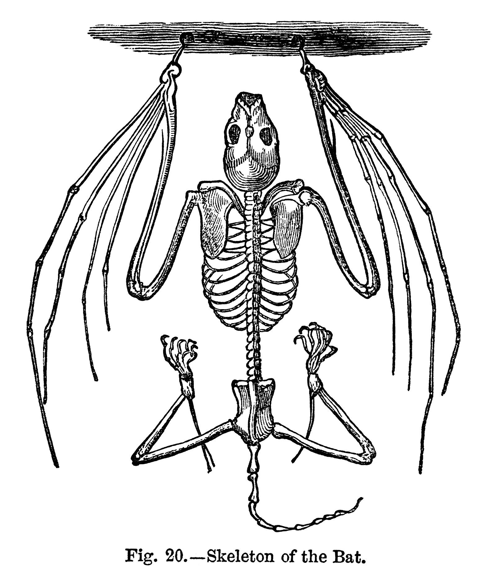 vintage halloween clipart black and white